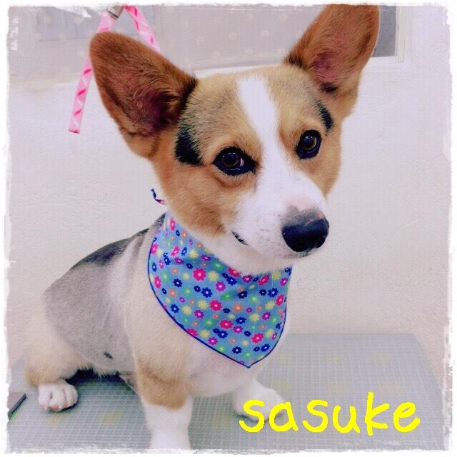 sasuke 上平