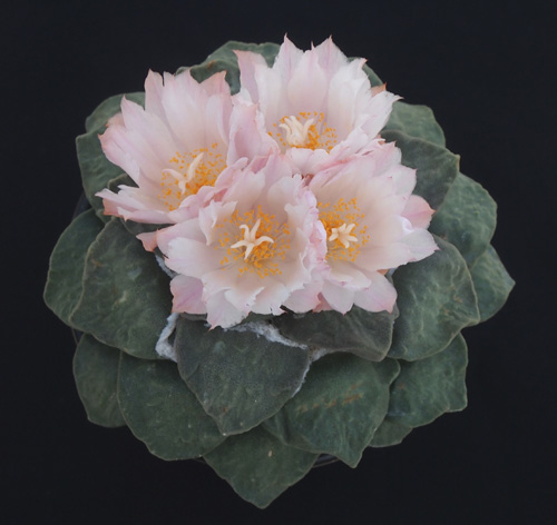 花の変化3