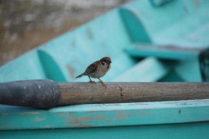ディズニーシー 2015 ケープコッド 野鳥