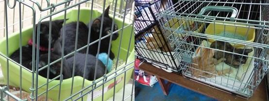 cats151011_2-tile.jpg