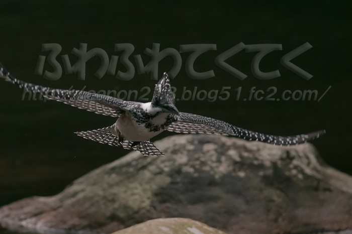 1DX_1522LR_1507.jpg