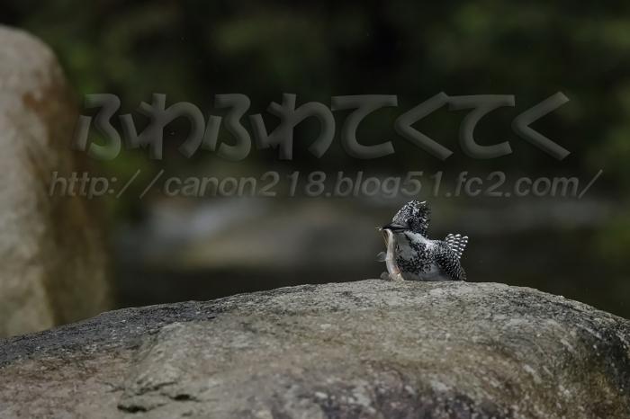 5DSR4857LR_1509.jpg