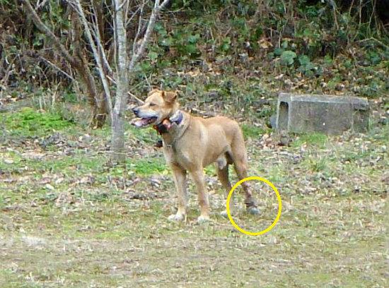 2014.02.06破足の猟犬2