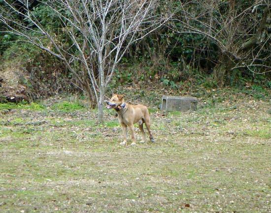 2015.02.16破足の猟犬1