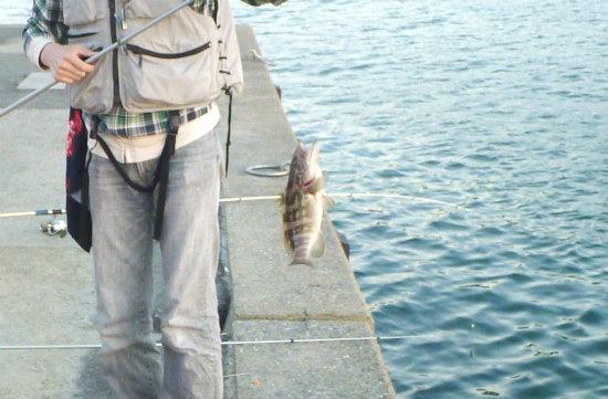 2015.10.08にぎやかな夜釣り2