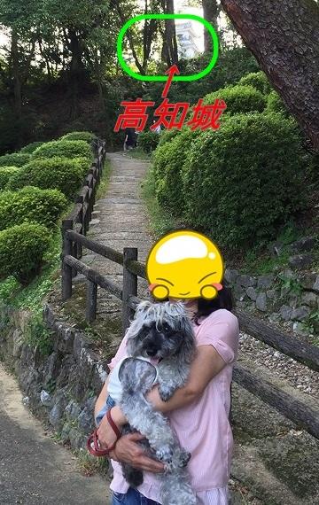 高知城-crop