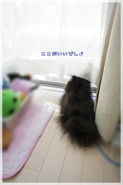 窓際へ6 15-09