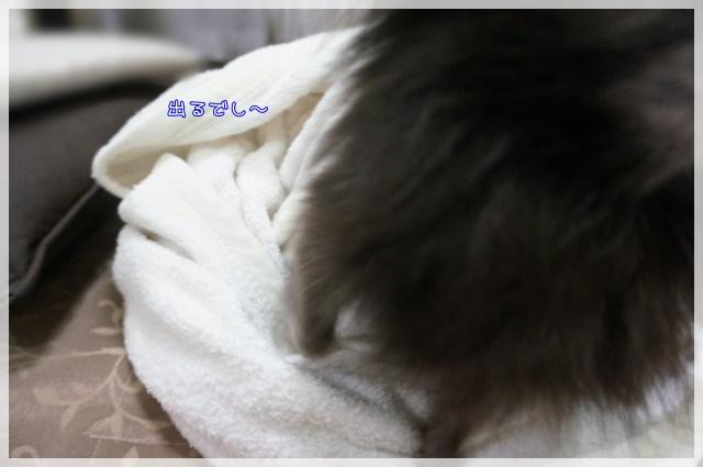 ちろるまき6 15-09