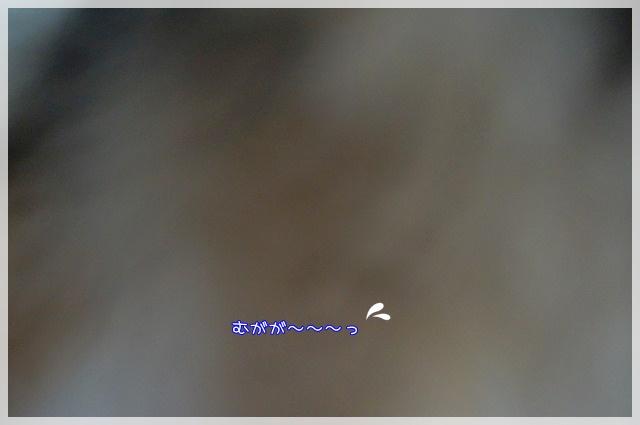ぺたんちょ8 15-09