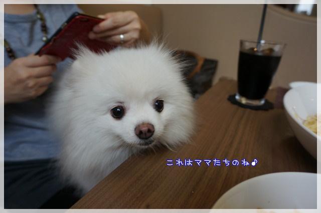 しろいぬカフェ10-1 15-09