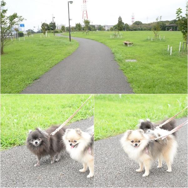 公園散歩2 15-10