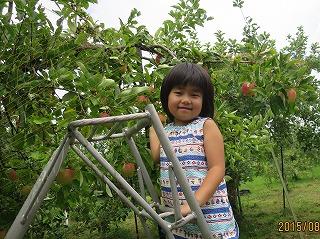 あいtyんリンゴ摘み