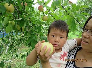 きゅうちゃんリンゴ摘み