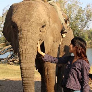 本宮さん・ 象と遊ぶ