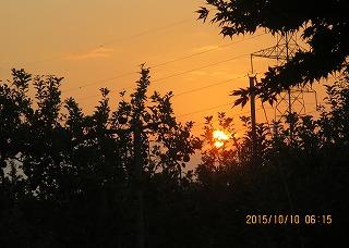 りんご園に日が昇る