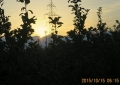 リンゴ園の日の出