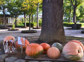 005ジャンボかぼちゃ