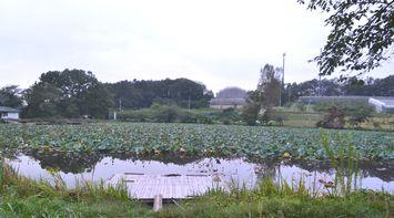 006浜津ケ池