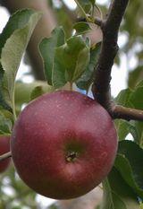 005りんご畑