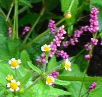 004野の花3