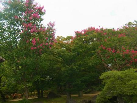 syukusyo-RIMG0065_2015082916155924f.jpg