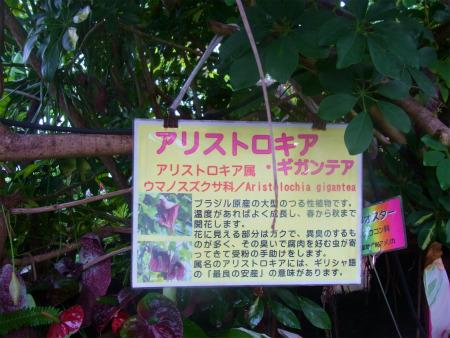 syukusyo-RIMG0114.jpg