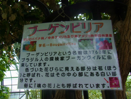 syukusyo-RIMG0120_20150906183708ddf.jpg