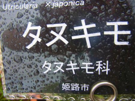 syukusyo-RIMG0138_20150906184954757.jpg
