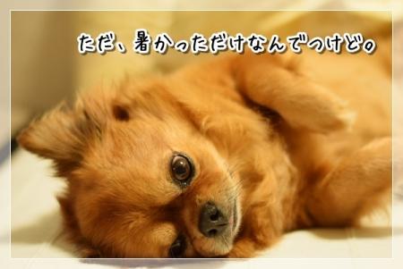 DSC_5681_20150827123126e7d.jpg