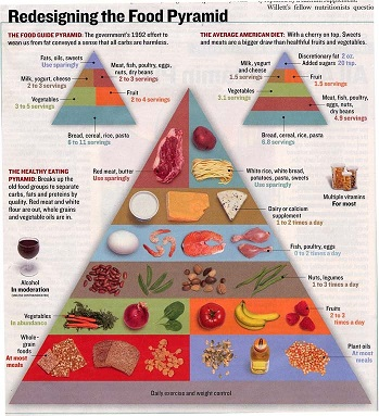 Redesigning the Food Pyramid