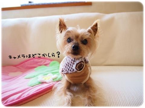 ミライチデビュー (4)