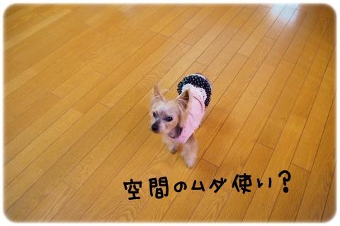 全天候型ドッグラン (1)