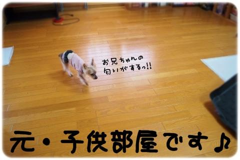 全天候型ドッグラン (3)