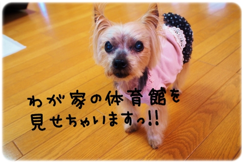 全天候型ドッグラン (2)