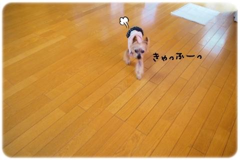 全天候型ドッグラン (4)
