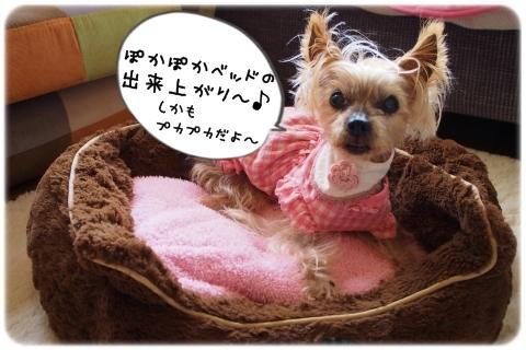 「ゆたぽん」愛用中 (1)