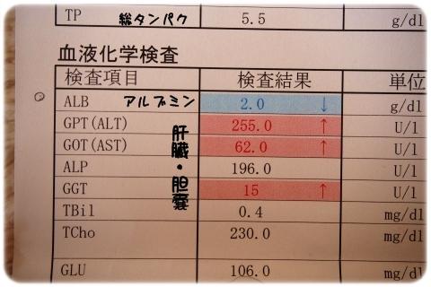 ステロイド再開 (3)