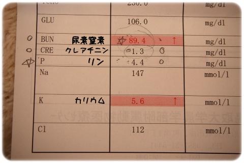 腎臓はいいの悪いのどっち (4)