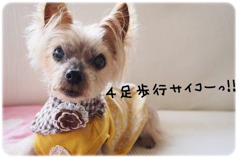 4足歩行バンザイ (1)