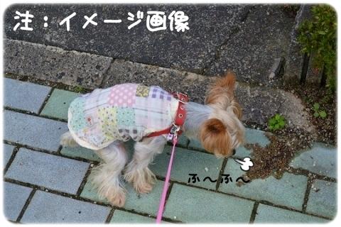 4足歩行バンザイ (2)