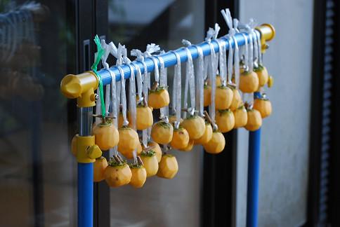 干し柿を吊るした