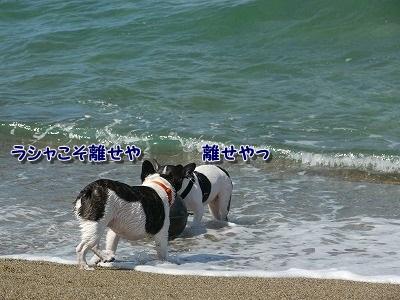 白兎海岸2 (2)