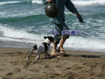 白兎海岸4 (4)