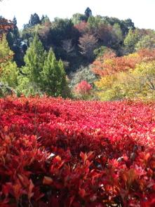 ブログ用秋のまきばの館2