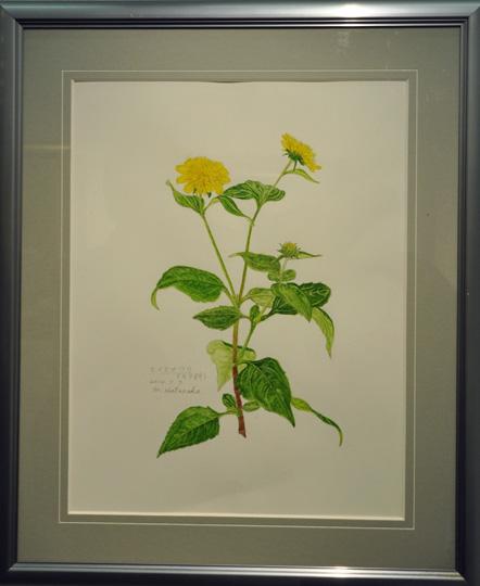 23畑中美和子「植物画」