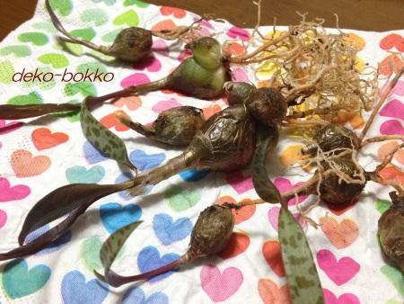 ゆぽぽ屋 豹紋 バラバラ 201510