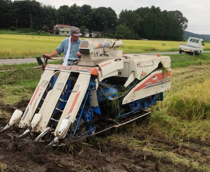 2015稲刈り1