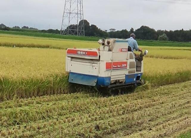 2015稲刈り2