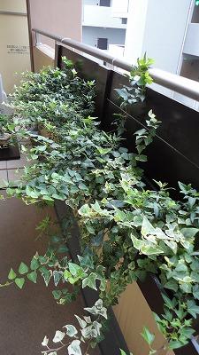 green0927_2015_6.jpg