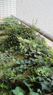 green1009_2015_6.jpg